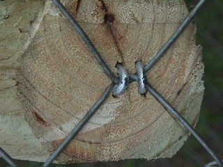 Great idea to remember when building our new aviary. Use fencing staples to attach perches.