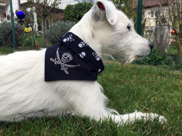 · Hunde Bandana mit Totenkopfmotiv aus Strass vom Label houndsland · Halstücher für Hunde in limitierter Auflage · Bandana für Hunde mit glitzerndem Strassmotiv · Hunde Bandana erhältlich in 7 Größen · Strass für Hunde – heiß begehrt, nicht nur in St. Pauli · Skull für Hunde im modischen Trend