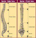 The Spinal Column - Essential structure and the consequences of injury explained.
