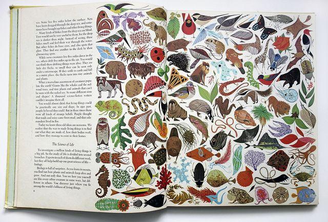 """Charley Harper's illustrated """"Biology"""""""