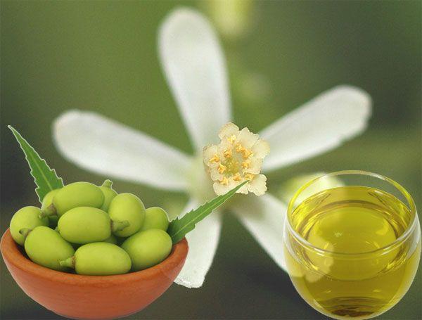 Λάδι Neem (Neem Oil)