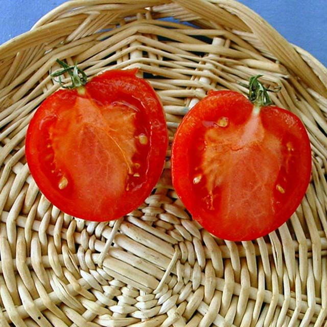 Heirloom Tomato Arkansas Traveler エアルーム・トマト・アーカンソー・トラベラー