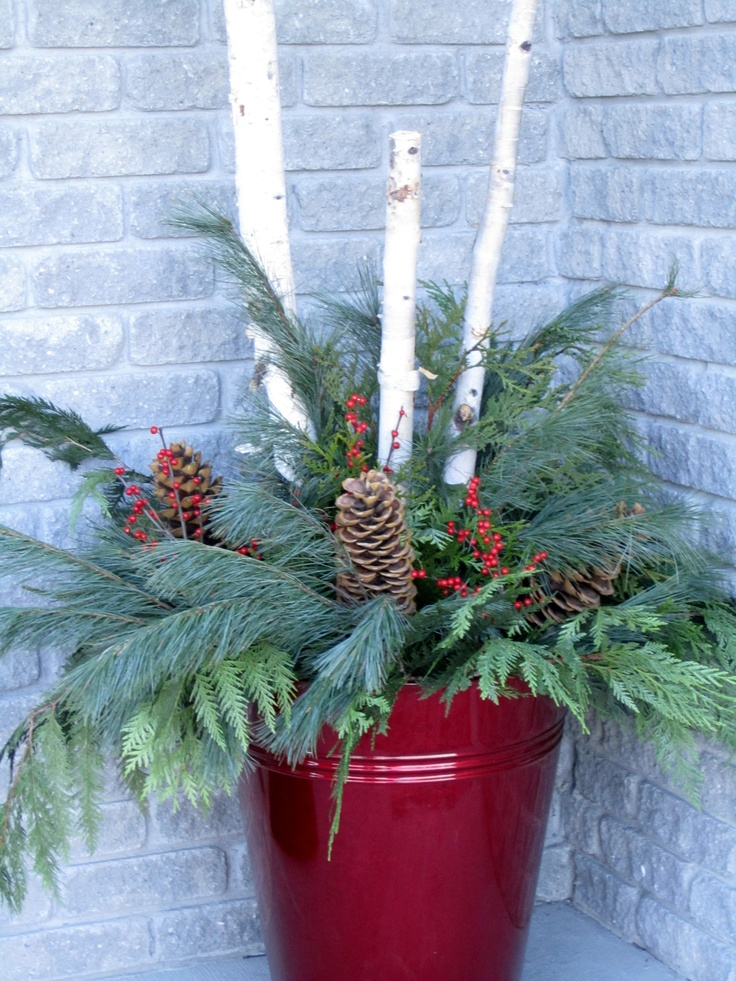 Birch Poles And Evergreens In Red Container Christmas