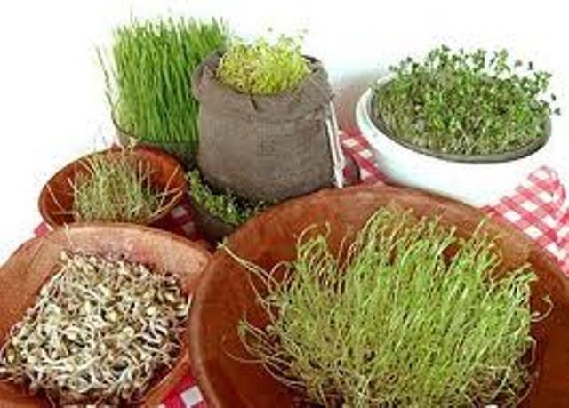 ecoideas y reciclaje germinados como hacerlos en tu casa