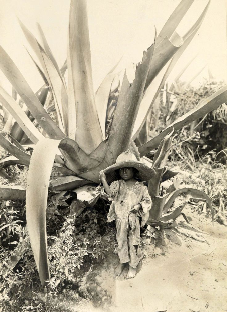 Child in the shade of an Agave plant, Atzcapotzalco, Mexico, 1916