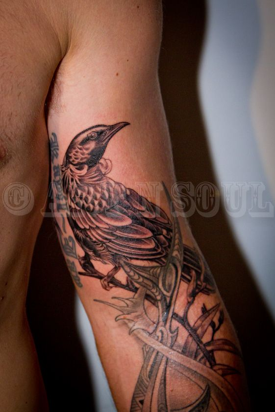 Black and Gray Tui Tattoo