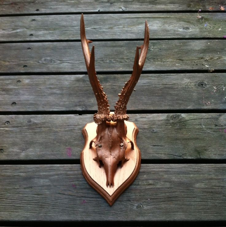 Stor kobber dreng via Gevir Og Horn - Antlers. Click on the image to see more!