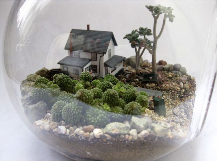 Mira lo sencillo que es crear un #terrario con plantas miniatura: