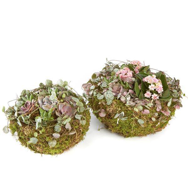 Bollen & Planten.  Velen van u bezoeken met regelmaat een graf of een herdenkingsplaats van uw overleden dierbaren. Het is dan niet ongebruikelijk om bloemen of planten te plaatsen. Gemaakt door Afscheid met Bloemen.