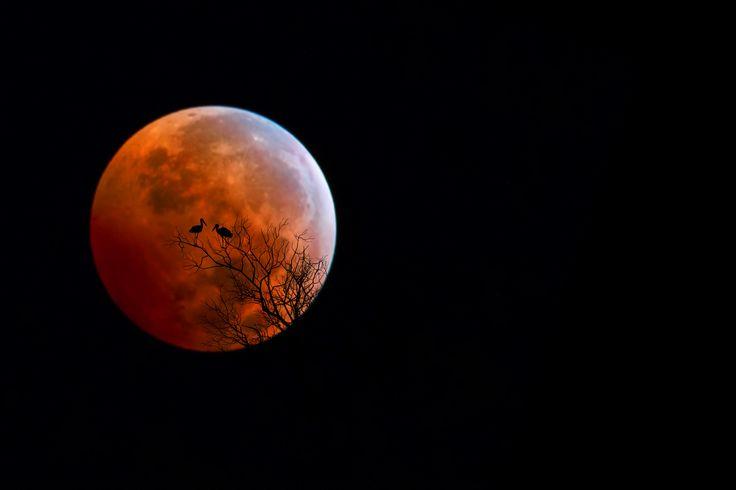 Fotografía Bloody Moon por Bess Hamiti en 500px