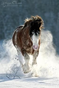 Clydesdale  horse in the snow Makes me think of my BFF She loves horses. They sooth her soul! Kind of like animals soothing mine!