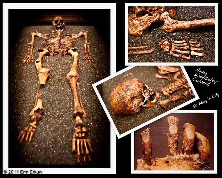 bone forensic anthropologists essay Forensic anthropology center forensic anthropology center department of  anthropology 601 university drive san marcos, tx 78666 phone: 512-245-1900.