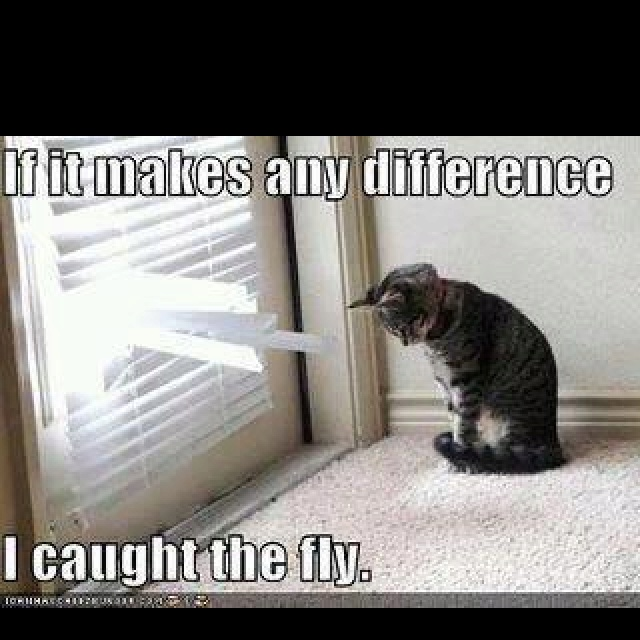 Flys!: Laughing, Cat, Pet, Make A Difference, Funny Stuff, House, Kitty, True Stories, Animal