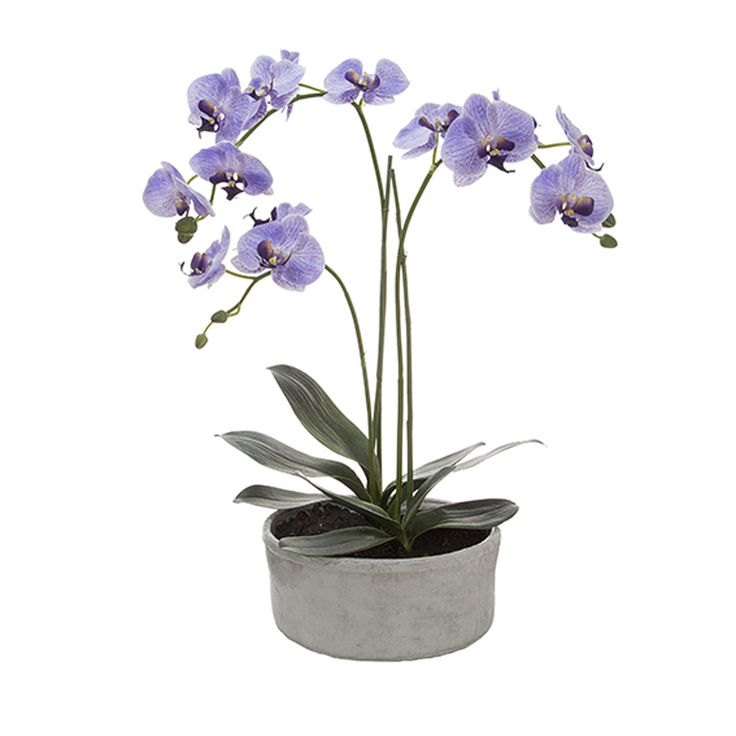 Phalaenopsis in Pot  http://www.achica.com/product/MTRA-00088291/phalaenopsis-in-pot/