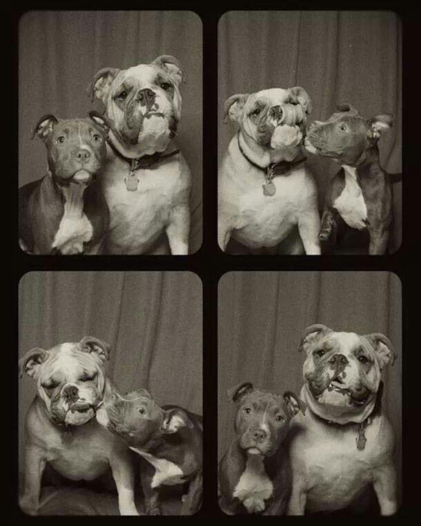 Dogs at photo #digianimalworldro