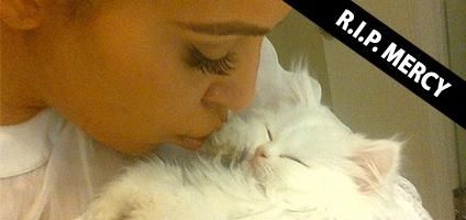 Thoughts on the Death of Kim Kardashian's Teacup Persian Cat | Catster