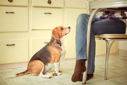 Which human foods can you feed your dog?: Dogs Training, Good Human Food For Dogs, Doggie Stuff, Food Bad For Dogs, Training Dogs, Puppys Stuff, Food Dogs, Amazing Animal, Dogs Beg