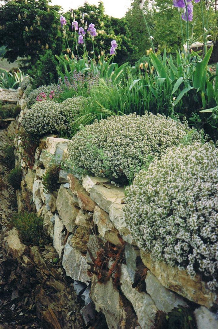 25 Best Tuscan Garden Ideas On Pinterest: 25+ Best Ideas About Tuscan Garden On Pinterest