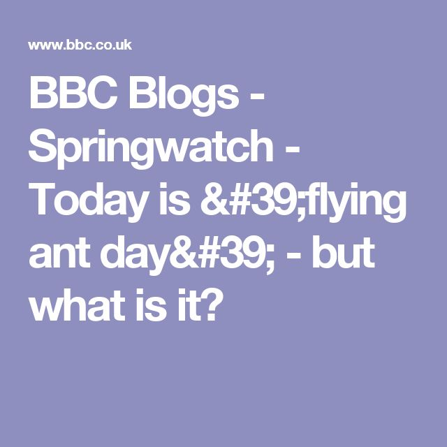 BBC Blogs - Springwatch - Today is 'flying ant day' - but what is it?