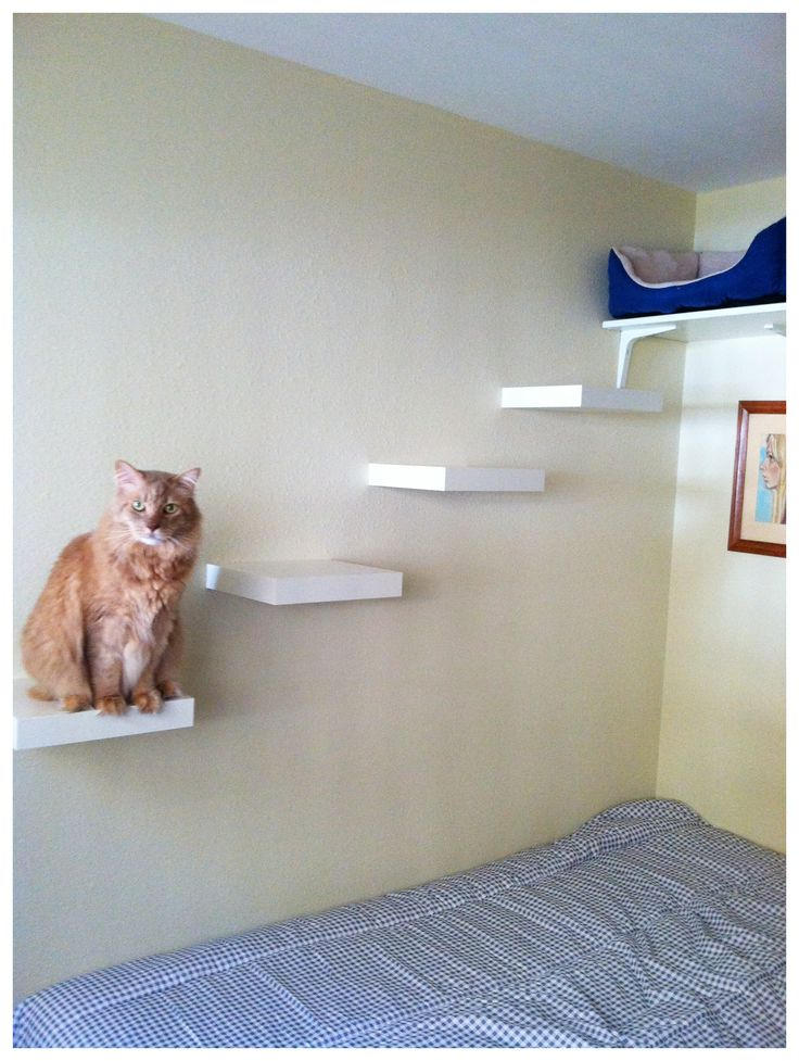 Cat shelves and bed.