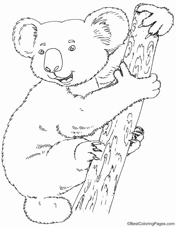 Koala Bear Coloring Page Beautiful 172 Best Australia Theme Images On Pinterest Bear Coloring Pages Koala Drawing Coloring Pages