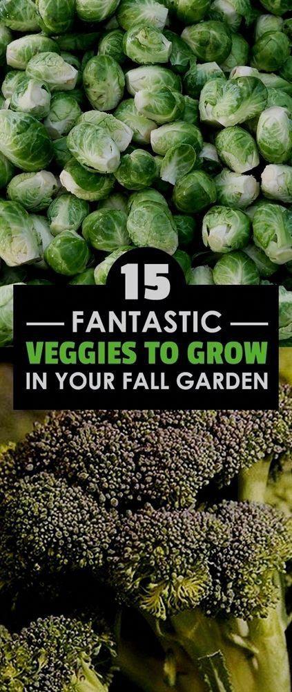 Vegetable Garden Layout Ideas Beginners Organicvegetablegardening