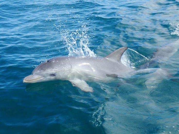 A new baby dolphin in Mandura
