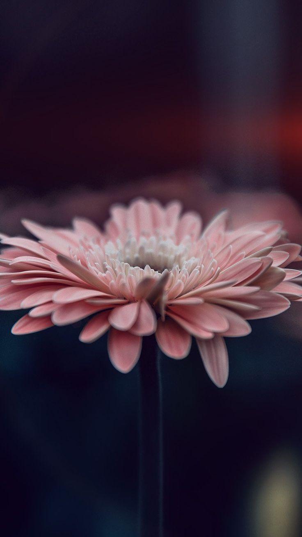 своих картинки для телефона цветок на айфон такой простотой