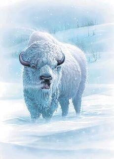Bison/Buffalo (Prayer & Abundance)  Earth Creativity  Feminine courage  Abundance  Knowledge  Generosity  Hospitality  Sharing work  Courage  Strength  Challenge  Survival  Giving for the greater good  Formulating beneficial plans