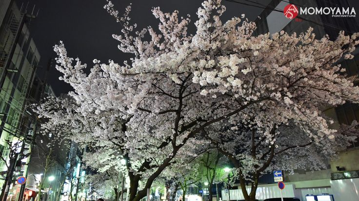 Kawaramachi dori, Kyoto city, Japan