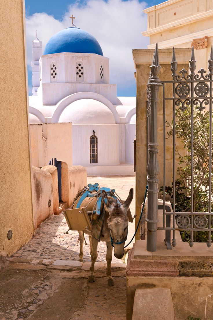 A donkey tied outside a hotel in Pyrgos village, Santorini island, Greece. - selected by www.oiamansion.com