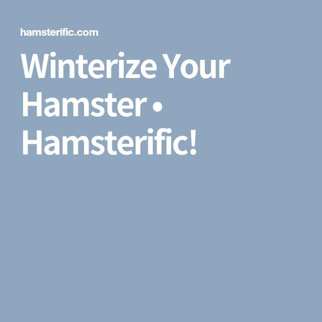 Winterize Your Hamster • Hamsterific!