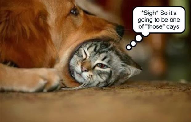 sigh another one of those days im feeling u kitty im feeling u