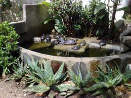 M s de 25 ideas incre bles sobre estanque de tortugas en - Como construir un estanque para tortugas ...