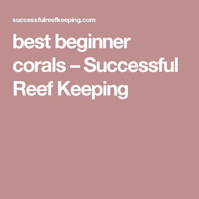 best beginner corals – Successful Reef Keeping