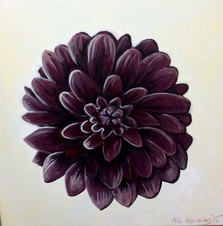 Black dahlia for Peggy