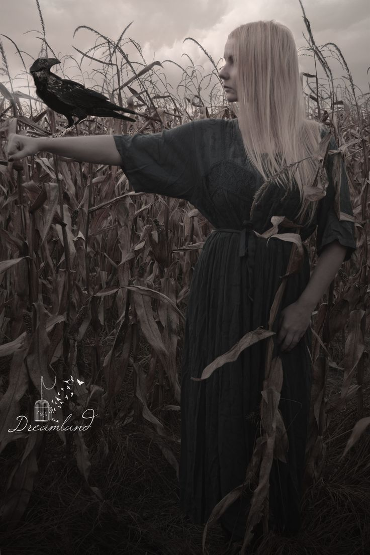 Dreamland Photography  #corn #halloween #horrorphoto #halloweenphoto #deamland #witch #bird #blackbird #raven