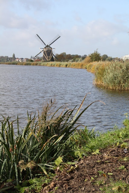 Madelief: Holland, Rotterdam, De Rotte
