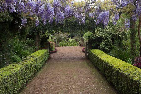 Portugal Webseite Von Winfried Rusch Exotische Pflanzen Garten Und Pflanzen