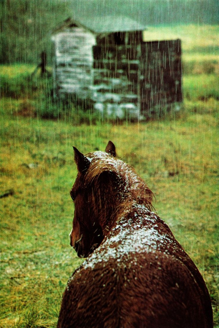 on all God's creaturesBeautiful Hors, Children, Winter Is Come, Snowy Hors, Beautiful Creatures, Rain, Animal, Country, Fairies Tales