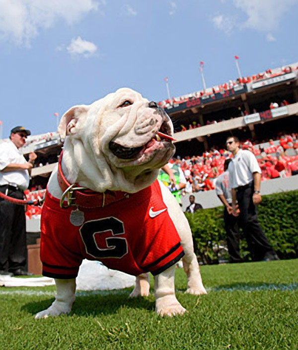 georgia bulldog fans 1875 best georgia bulldogs images on pinterest georgia 5121