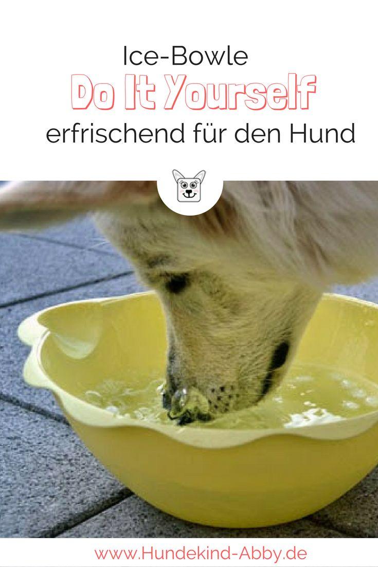 Jetzt wo es wieder wärmer wird freuen sich unsere Hunde über eine tolle Erfrischung. Hier geht es zur Ice-Bowle.