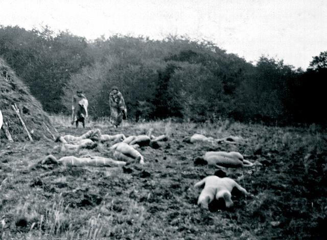 Selk'nam people - A los indios los mataban como hoy se matan lagartos, pumas, mulitas, loros, cóndores y vizcachas, para que sus tierras sirviesen para las ovejas.