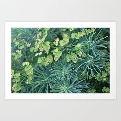 "'Euphorbia Cyparissias ""Fens Ruby""' by Shy Photog - $18.00"