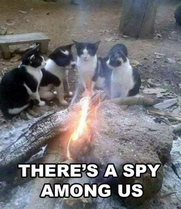Funny Cat Memes and Pictures – 54 Pics