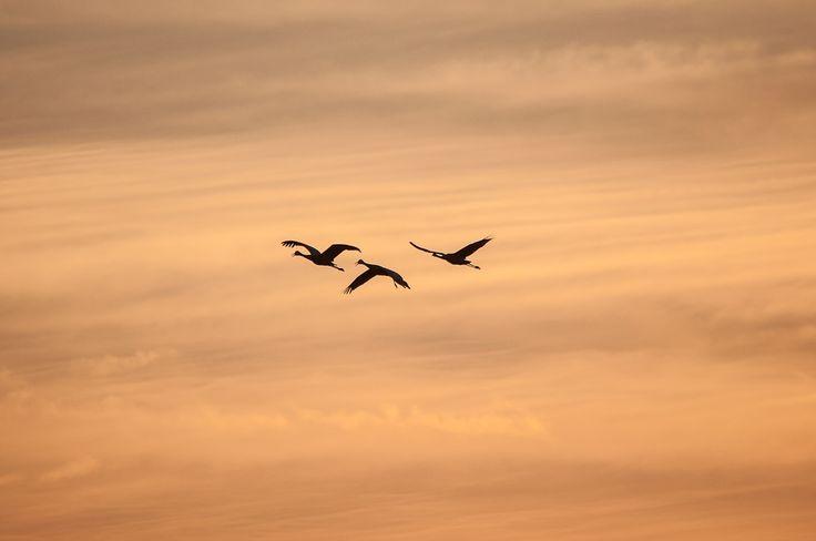 Silhueta, Guindaste, Pássaros Voando, Nuvens