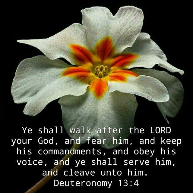 Dueteronomy 13:4 KJV