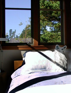 We're coming back here for sure - Cabin Three - The North Tower, Manzanita Oregon. My favorite things about this place are its clean, modern decor, its great use of space, the side patio with deck chairs for reading, the bamboo forest, and the hot tub!