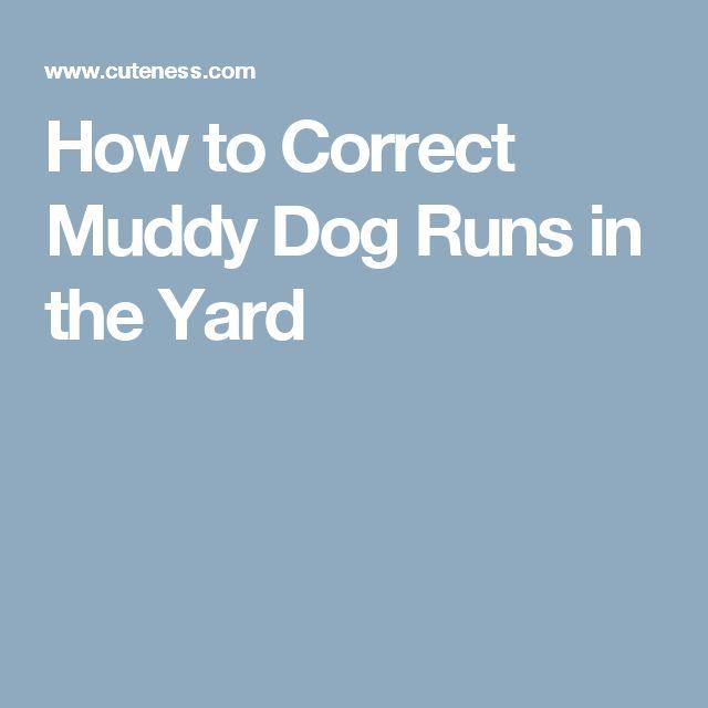 How to Correct Muddy Dog Runs in the Yard