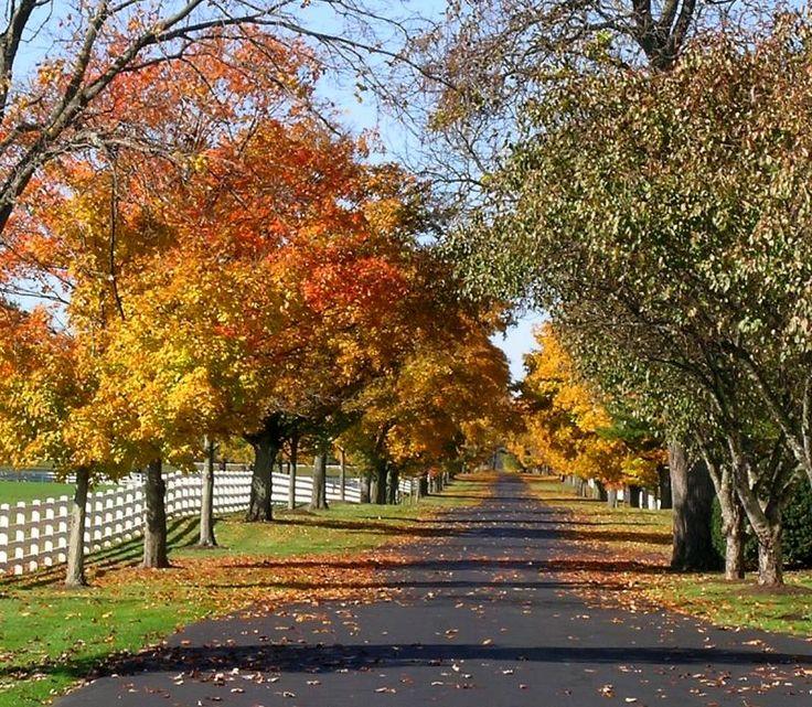 Ohio Horse Farm in Fall